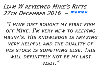 Mikes Rifts Review 2