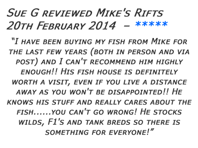 Mikes Rifts Review 5